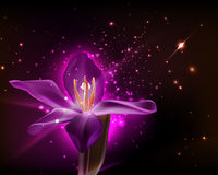 Single fantasy purple orchid as background design Stock Photo