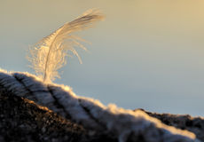 Single feather. Sunlight shining on single vertical feather with sky background and copy space Stock Image