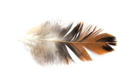 Single feather isolated on white background Royalty Free Stock Images