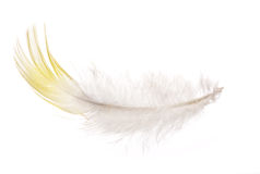 Single feather with yellow edge isolated on white Royalty Free Stock Photos