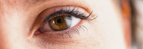 Female eye with eyelashes close-up Stock Image