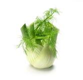 Single fennel Royalty Free Stock Photo
