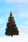 Single Fir Tree at Winter Stock Photo