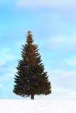 Single Fir Tree at Winter Stock Photo