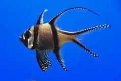 Single Fish In Aquarium Stock Images