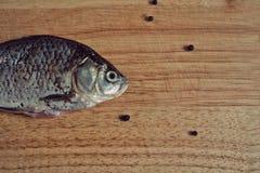 Single fish Royalty Free Stock Photos