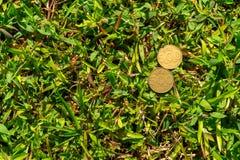 Rupiah coin money on green grass. Single five hundred Indonesia Rupiah coin money on green grass Stock Photos