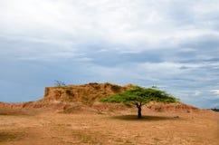 Single flat-top green tree in orange savanna terrain Royalty Free Stock Photography