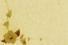 Single flower on creamy paper textured background Stock Images