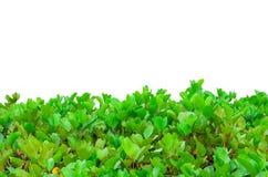 Single Flower Frame Stock Images