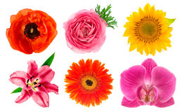 Single flower heads. Lily, orchid, ranunculus, sunflower, gerber Stock Photo