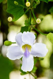Single Flower Stock Image