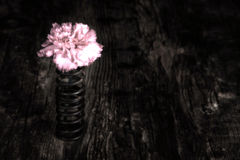 Single flower in metal spring on grunge wood surface artistic co Royalty Free Stock Photography