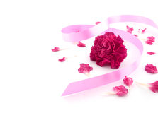 Single flower, pink carnation with pink ribbon on white Royalty Free Stock Images