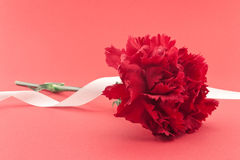 Single flower, red carnation with white ribbon on red background Stock Image