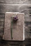Single flower on vintage  book on wood background Royalty Free Stock Image