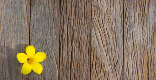 Single flower on a wooden background. Single yellow flower on a wooden background Stock Photo