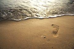 Single Foot Print at The Beach Stock Image