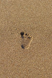 Single footprint in the sand Stock Photography