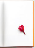 Single Free space paper and red frangipani flower Royalty Free Stock Images