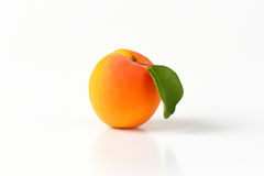 Single fresh apricot Stock Photos