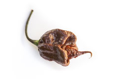Single fresh brown trinidad scorpion chili pepper on white Royalty Free Stock Photo