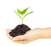 Green plant with dirt in a hand Stock Images