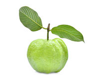 Single fresh guava fruit with green leaf isolated on white. Background Stock Photos