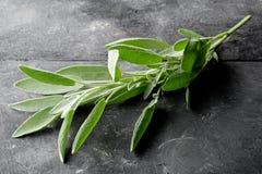 Single fresh harvested organic sage twig. Fresh, organic sage twig on dark wooden board background royalty free stock photos