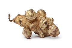 Single fresh Jerusalem artichoke Royalty Free Stock Images