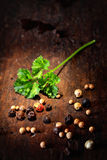 Fresh crinkly parsley and peppercorns Royalty Free Stock Images