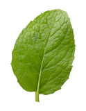 Single Fresh Mint Leaf. The image is a cut out, isolated on a white background Royalty Free Stock Photography