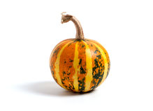 Single fresh pumpkin Royalty Free Stock Images