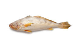 Single fresh raw butterfish Stock Image
