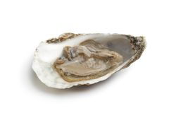 Single fresh raw oyster in an open shell. On white background Stock Images
