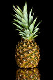 Single fresh ripe pineapple isolated on black Royalty Free Stock Image