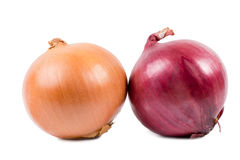 Brown and red onions Stock Images