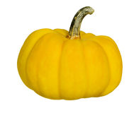 Single fresh yellow pumpkin Stock Photos
