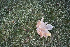 Single frosted leaf on grass. A single maple leaf lays on a carpet of frosted grass in autumn Stock Image