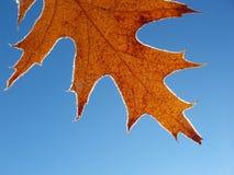 Single frosty leaf. With hoar against clear blue sky Stock Photos
