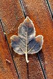 Single Frosty Leaf on Red Wooden Table. Frosty leaf on frozen wooden table on cold Winter morning, with wooden panel lines. Leaf structure visible, texture and Royalty Free Stock Images