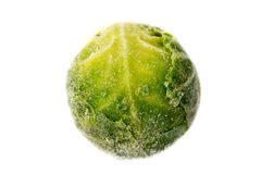 Single frozen sprout Royalty Free Stock Images