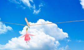 Single Fuchsia Head. Single fuchsia bloom hanging on washing line on summers day Royalty Free Stock Photos