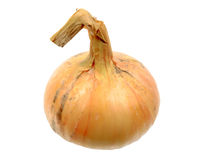Single full orange onion Stock Photos
