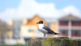 Free Single Fulmar Bird On The Post Royalty Free Stock Photos - 128722678