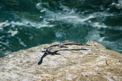 Single gannet on edge of cliff royalty free stock image