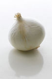 Single Garlic Stock Image