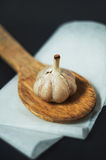 Single garlic bulb on a wooden spoon. Against dark background Stock Image