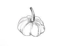 Single garlic over white Royalty Free Stock Photos
