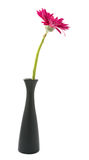 single gerbera  flower pink on vase isolated on white background Royalty Free Stock Image